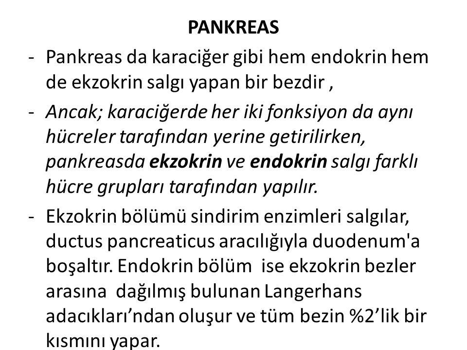 PANKREAS Pankreas da karaciğer gibi hem endokrin hem de ekzokrin salgı yapan bir bezdir ,