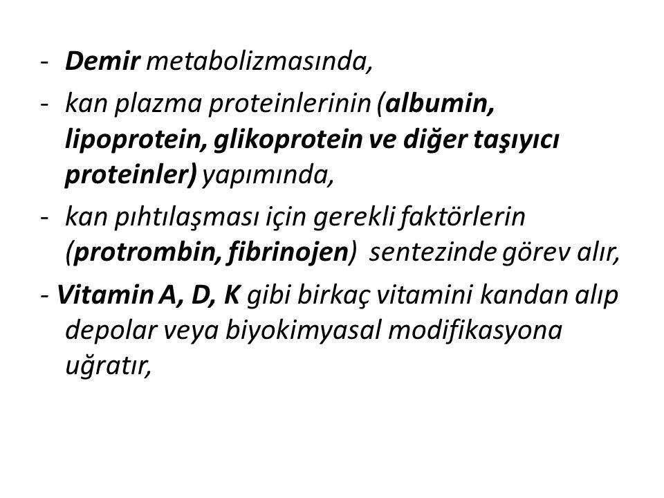 Demir metabolizmasında,