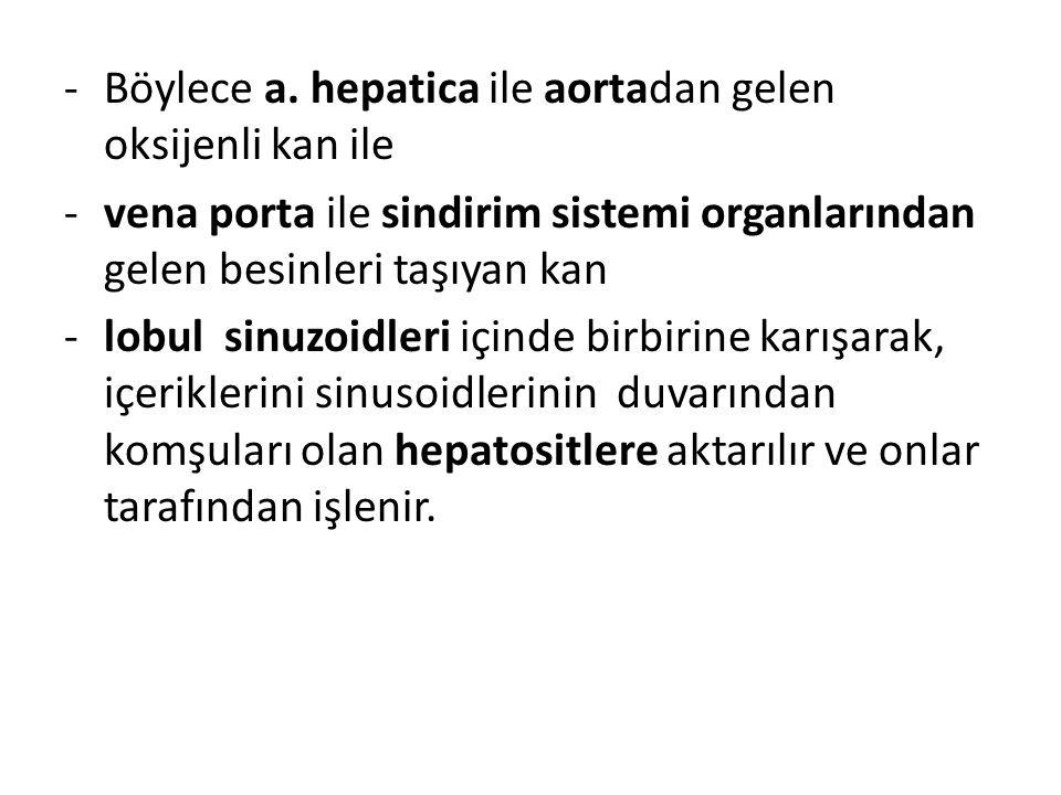 Böylece a. hepatica ile aortadan gelen oksijenli kan ile