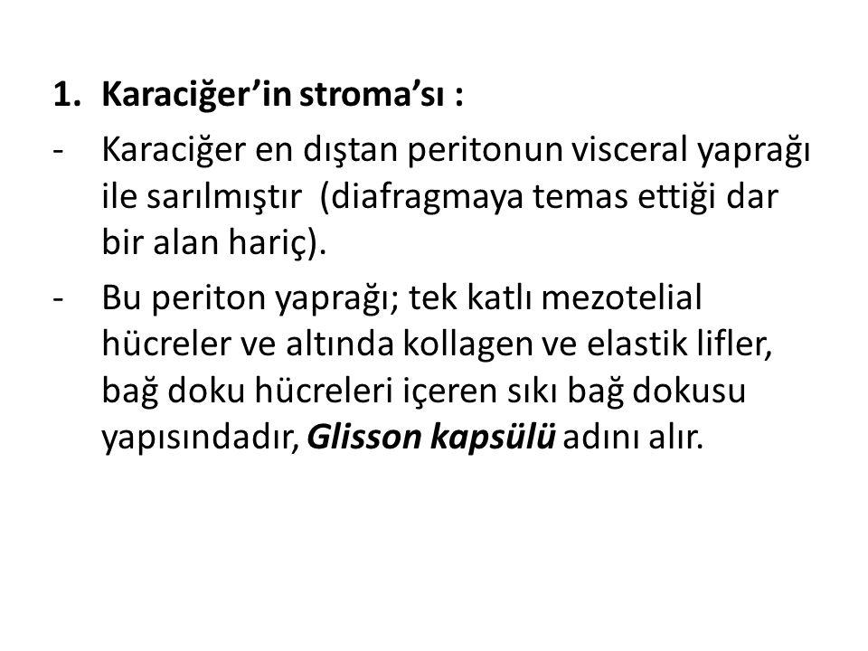 Karaciğer'in stroma'sı :