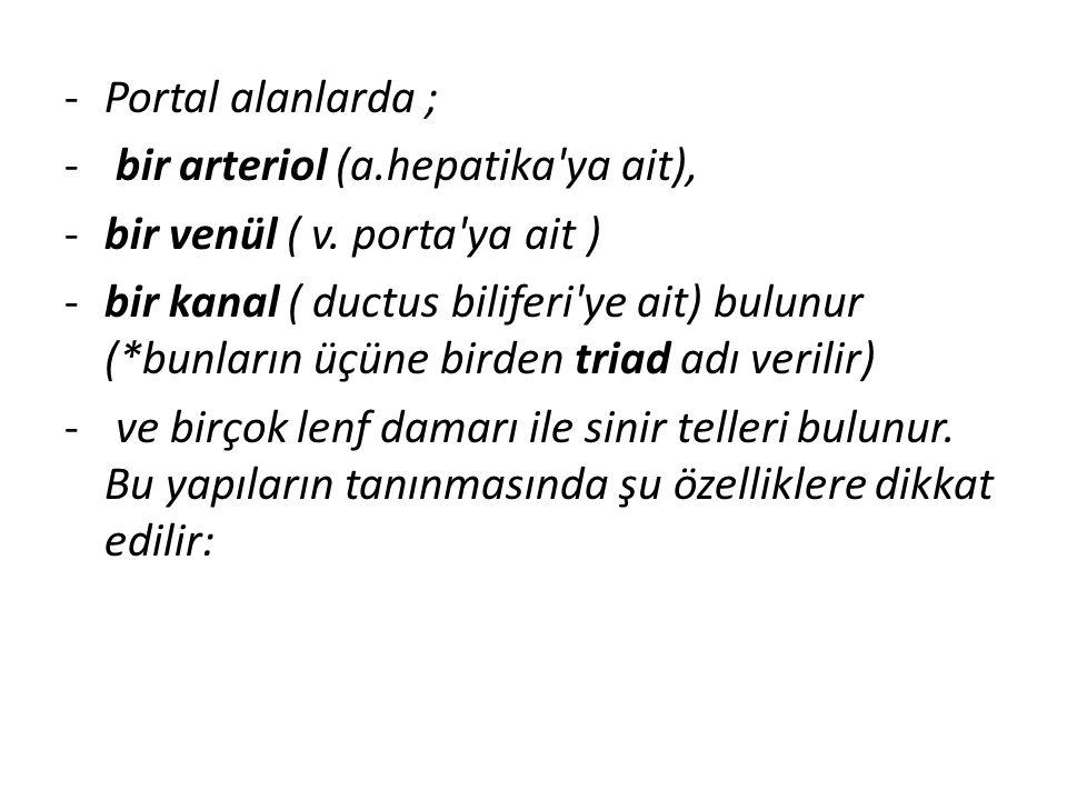 Portal alanlarda ; bir arteriol (a.hepatika ya ait), bir venül ( v. porta ya ait )