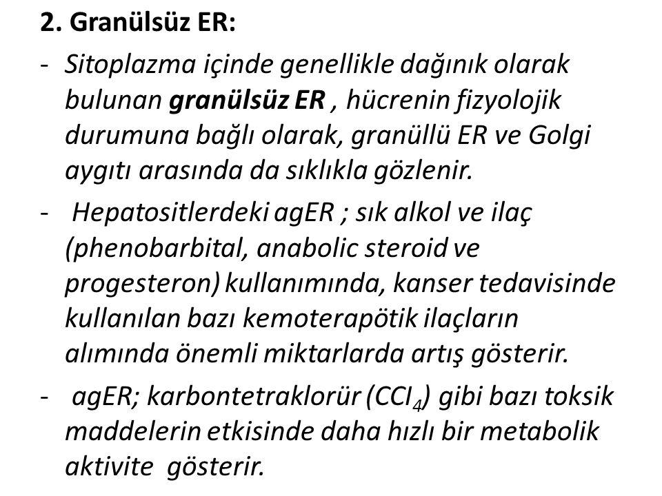 2. Granülsüz ER: