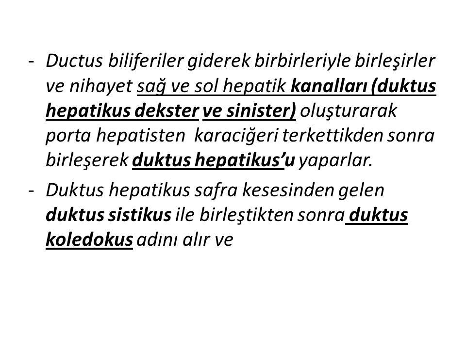 Ductus biliferiler giderek birbirleriyle birleşirler ve nihayet sağ ve sol hepatik kanalları (duktus hepatikus dekster ve sinister) oluşturarak porta hepatisten karaciğeri terkettikden sonra birleşerek duktus hepatikus'u yaparlar.