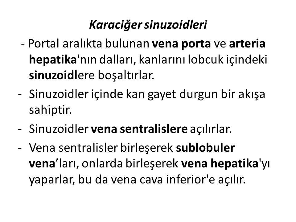 Karaciğer sinuzoidleri