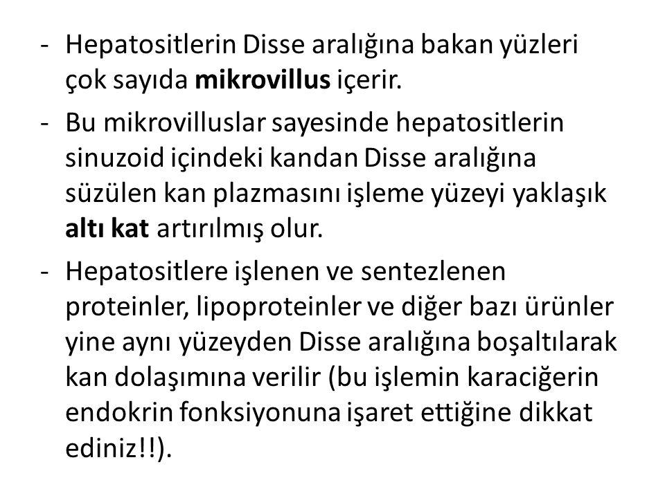 Hepatositlerin Disse aralığına bakan yüzleri çok sayıda mikrovillus içerir.