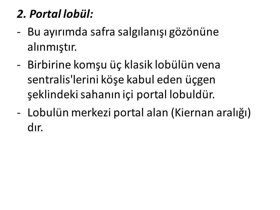 2. Portal lobül: Bu ayırımda safra salgılanışı gözönüne alınmıştır.