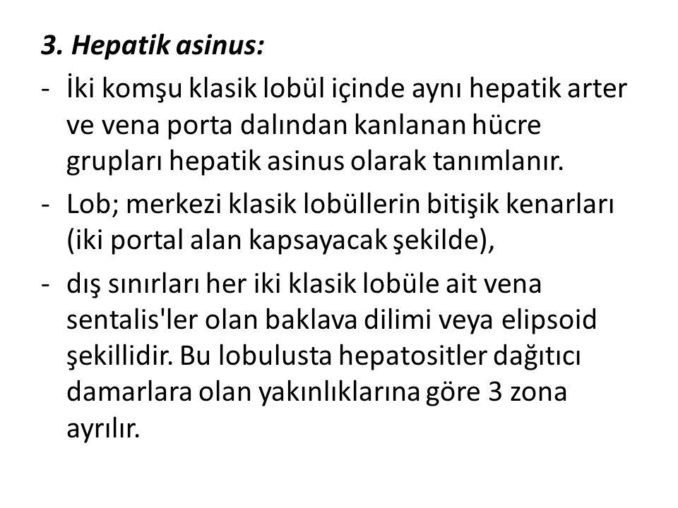 3. Hepatik asinus: İki komşu klasik lobül içinde aynı hepatik arter ve vena porta dalından kanlanan hücre grupları hepatik asinus olarak tanımlanır.