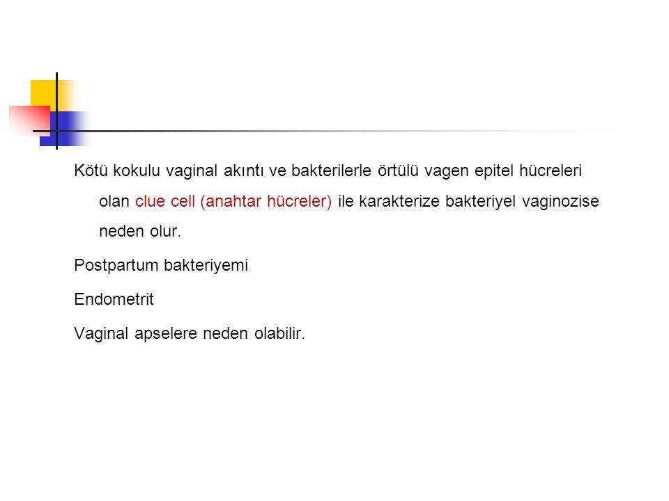 Kötü kokulu vaginal akıntı ve bakterilerle örtülü vagen epitel hücreleri olan clue cell (anahtar hücreler) ile karakterize bakteriyel vaginozise neden olur.