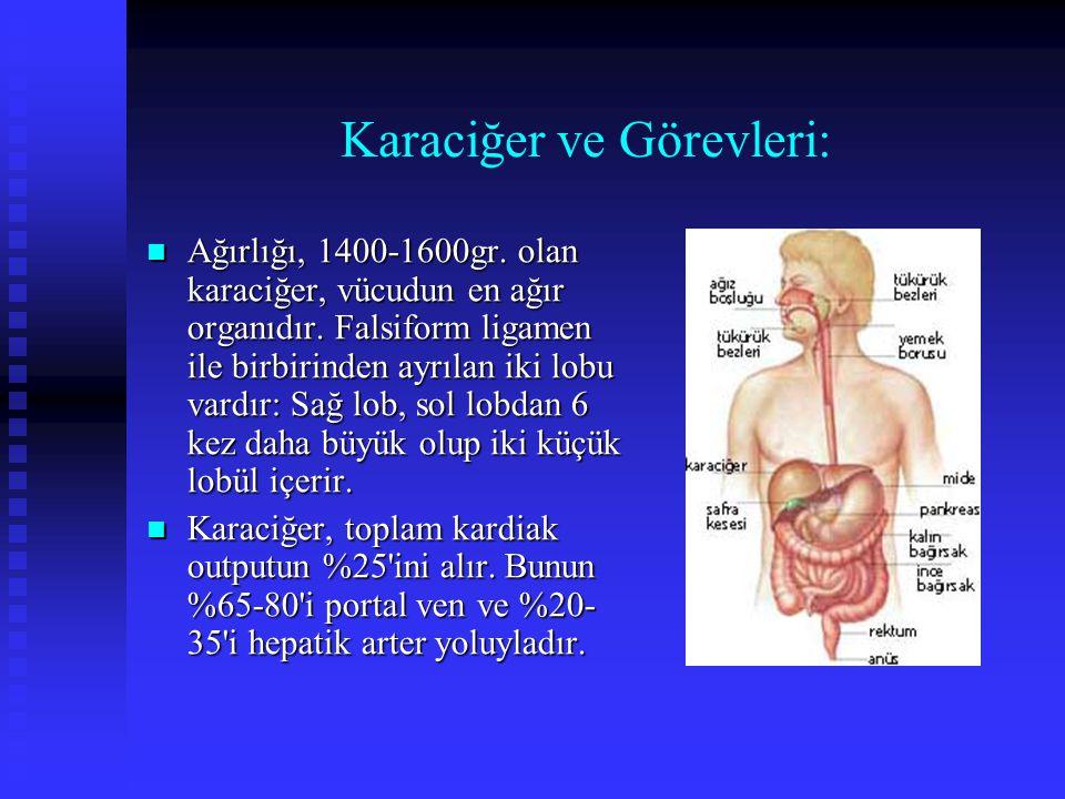 Karaciğer ve Görevleri: