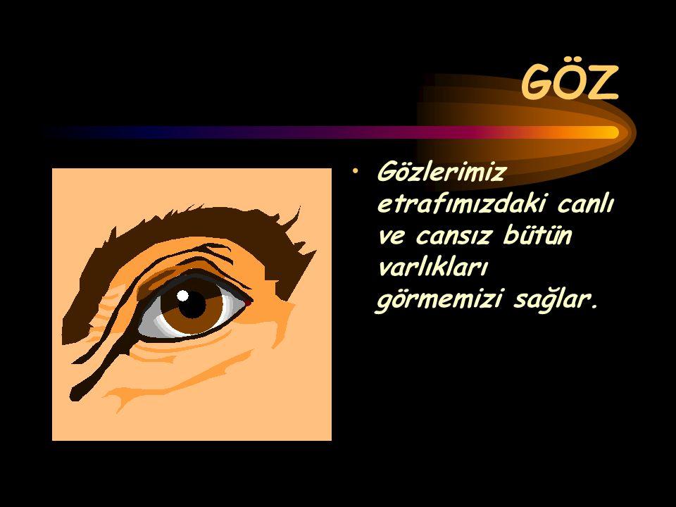 GÖZ Gözlerimiz etrafımızdaki canlı ve cansız bütün varlıkları görmemizi sağlar.