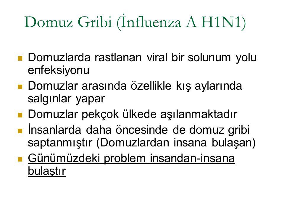 Domuz Gribi (İnfluenza A H1N1)