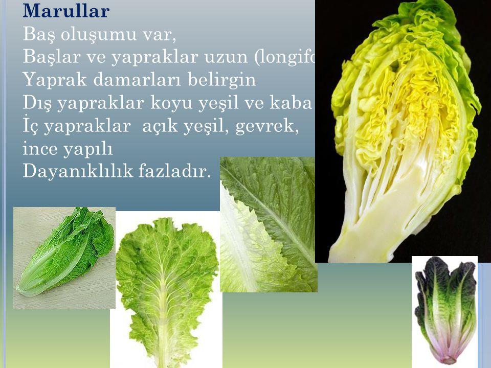 Marullar Baş oluşumu var, Başlar ve yapraklar uzun (longifolia) Yaprak damarları belirgin. Dış yapraklar koyu yeşil ve kaba yapılı.