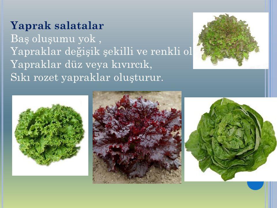 Yaprak salatalar Baş oluşumu yok , Yapraklar değişik şekilli ve renkli olabilir. Yapraklar düz veya kıvırcık,