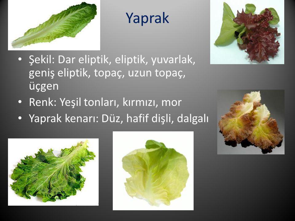 Yaprak Şekil: Dar eliptik, eliptik, yuvarlak, geniş eliptik, topaç, uzun topaç, üçgen. Renk: Yeşil tonları, kırmızı, mor.