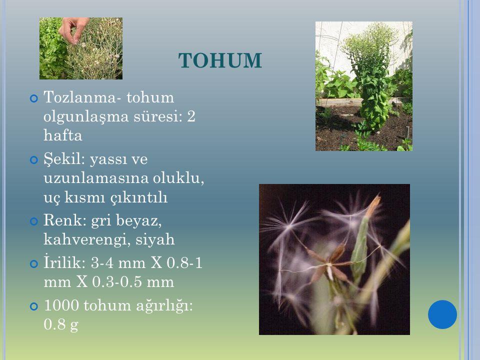 TOHUM Tozlanma- tohum olgunlaşma süresi: 2 hafta