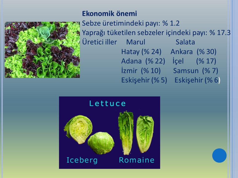 Ekonomik önemi Sebze üretimindeki payı: % 1.2. Yaprağı tüketilen sebzeler içindeki payı: % 17.3. Üretici iller Marul Salata.
