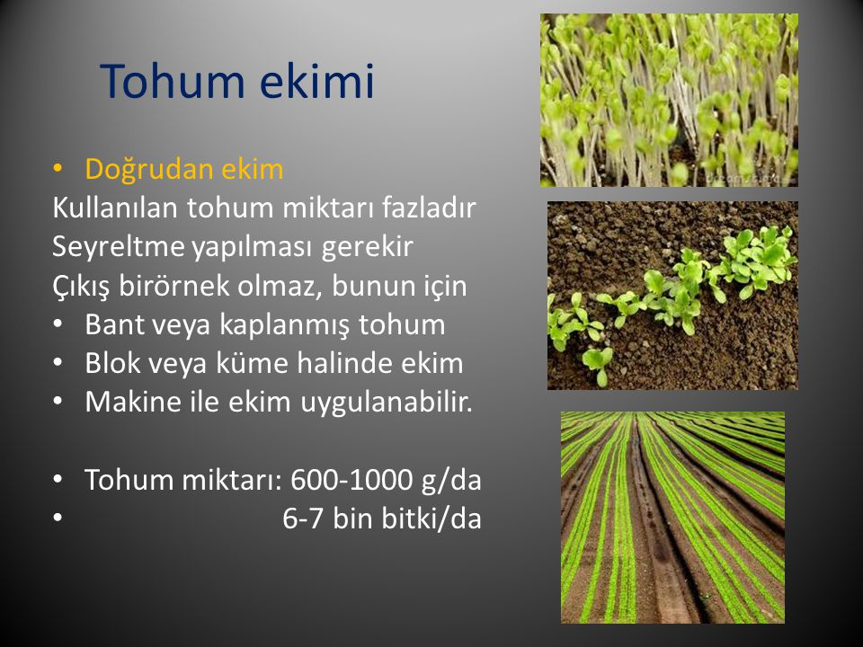 Tohum ekimi Doğrudan ekim Kullanılan tohum miktarı fazladır