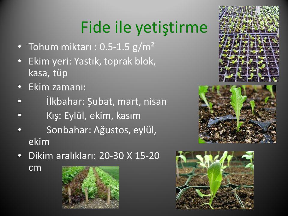 Fide ile yetiştirme Tohum miktarı : 0.5-1.5 g/m²