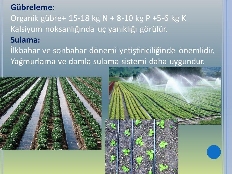 Gübreleme: Organik gübre+ 15-18 kg N + 8-10 kg P +5-6 kg K. Kalsiyum noksanlığında uç yanıklığı görülür.