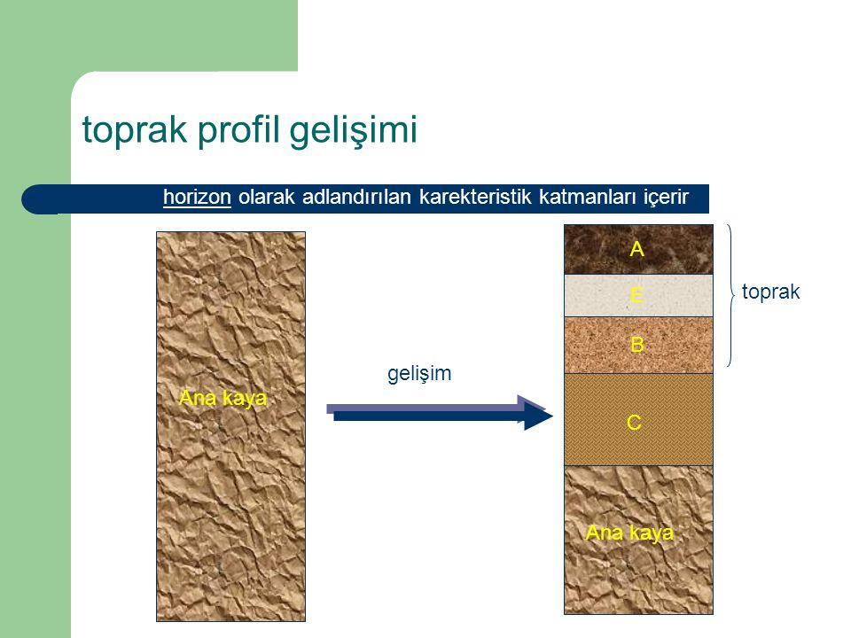 toprak profil gelişimi