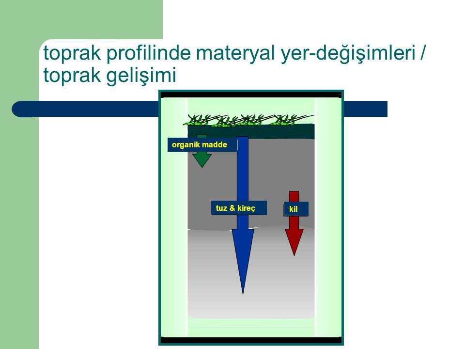 toprak profilinde materyal yer-değişimleri / toprak gelişimi