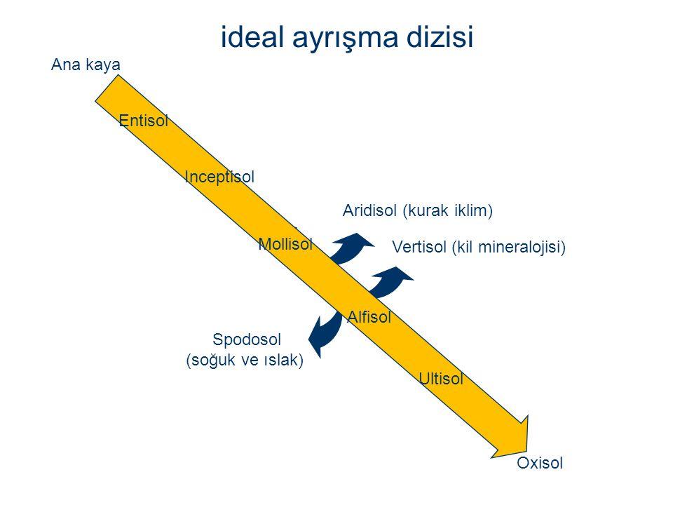 ideal ayrışma dizisi Ana kaya Entisol Inceptisol