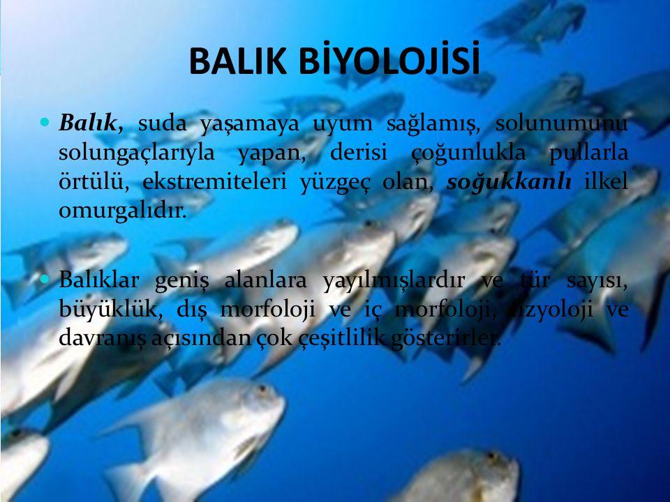 BALIK BİYOLOJİSİ