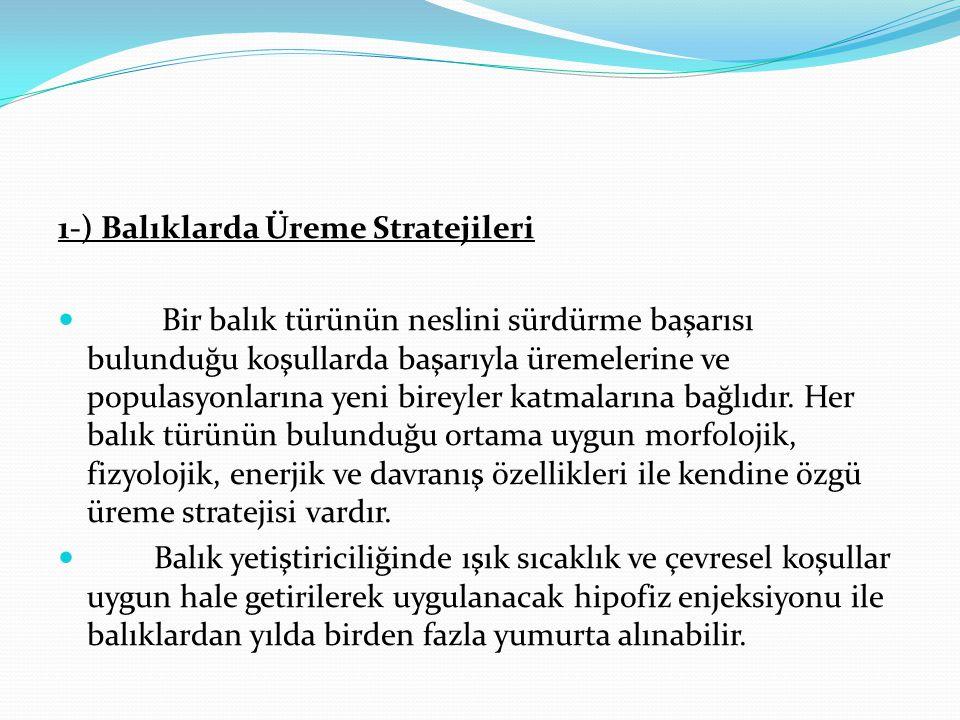1-) Balıklarda Üreme Stratejileri