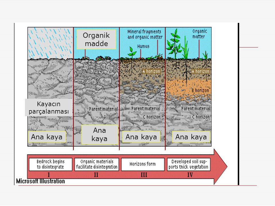 Organik madde Kayacın parçalanması Ana kaya Ana kaya Ana kaya Ana kaya