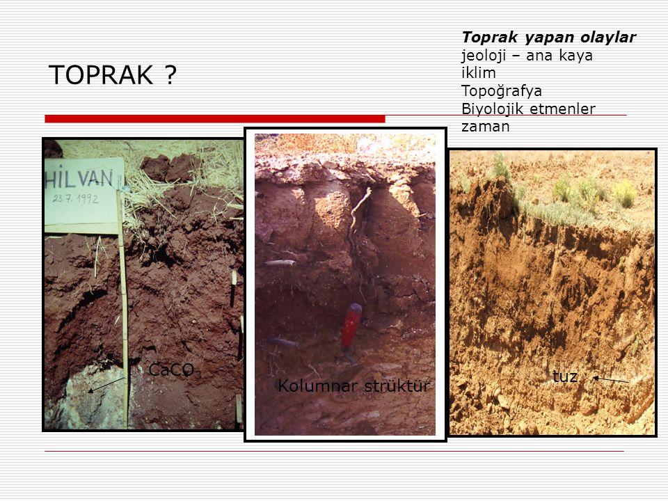 TOPRAK CaCO3 tuz Kolumnar strüktür Toprak yapan olaylar