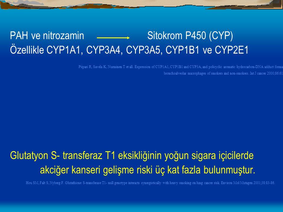 PAH ve nitrozamin Sitokrom P450 (CYP)