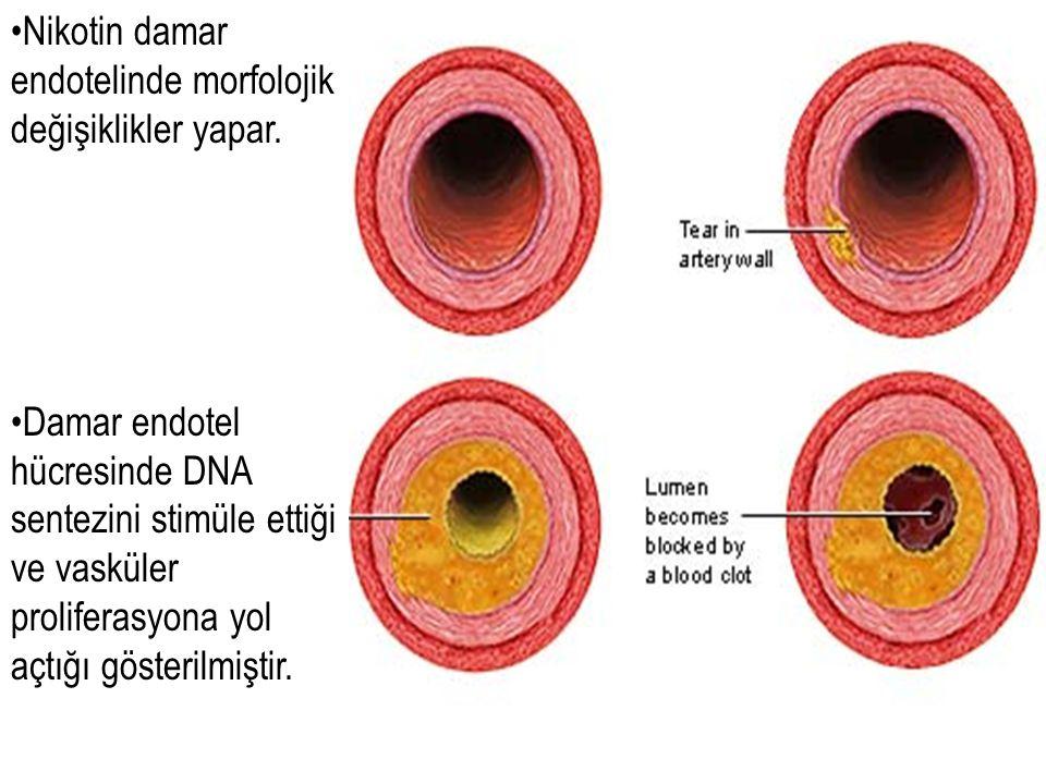 Nikotin damar endotelinde morfolojik değişiklikler yapar.