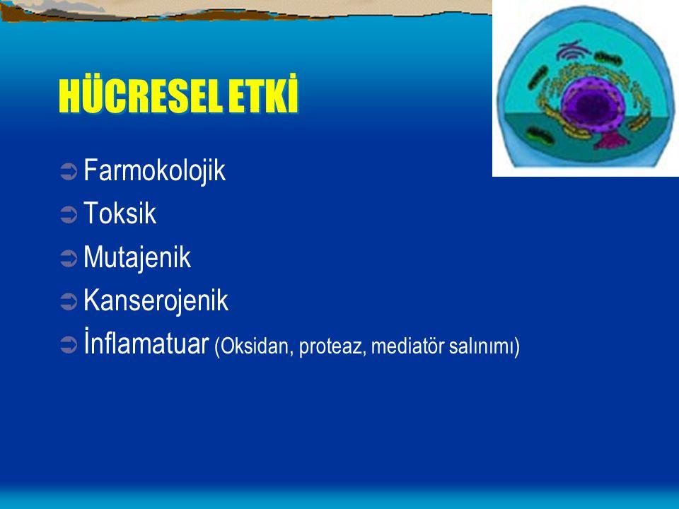 HÜCRESEL ETKİ Farmokolojik Toksik Mutajenik Kanserojenik