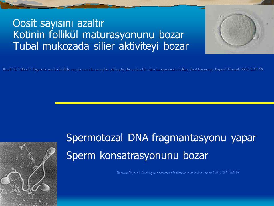 Spermotozal DNA fragmantasyonu yapar Sperm konsatrasyonunu bozar