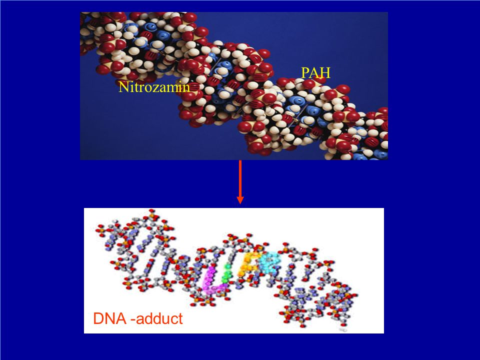 PAH Nitrozamin DNA -adduct