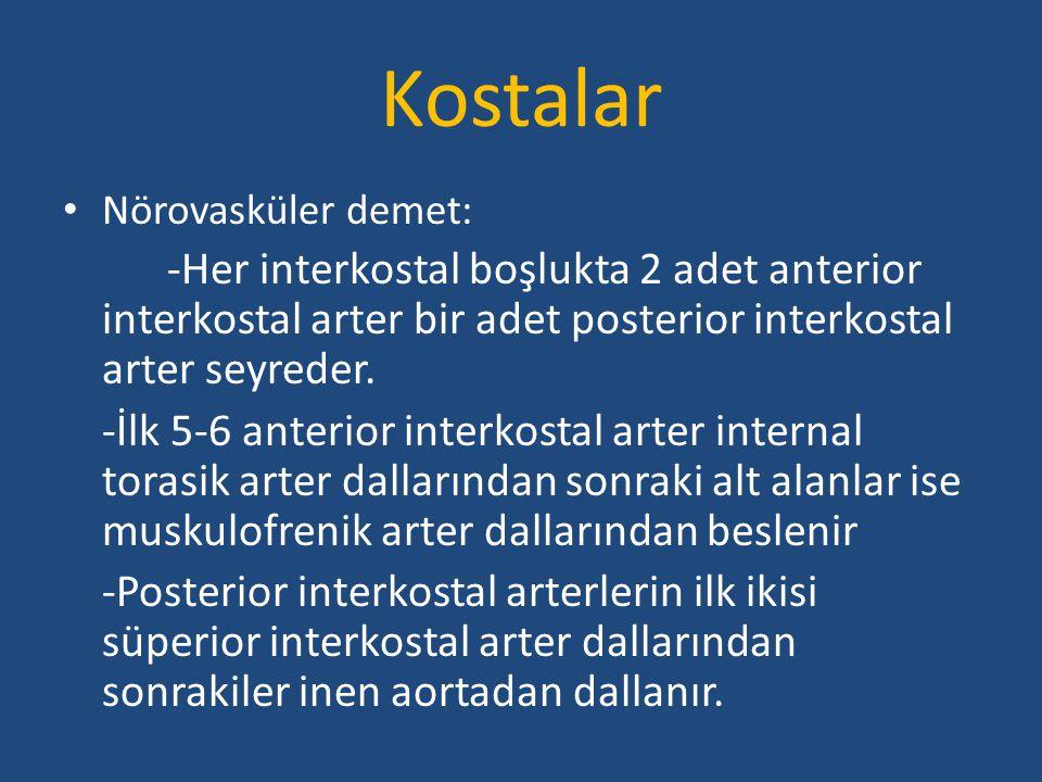 Kostalar Nörovasküler demet: -Her interkostal boşlukta 2 adet anterior interkostal arter bir adet posterior interkostal arter seyreder.