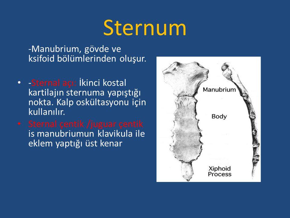 Sternum -Manubrium, gövde ve ksifoid bölümlerinden oluşur.