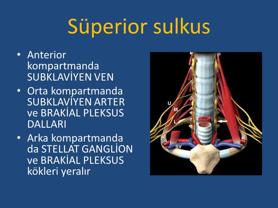Süperior sulkus Anterior kompartmanda SUBKLAVİYEN VEN