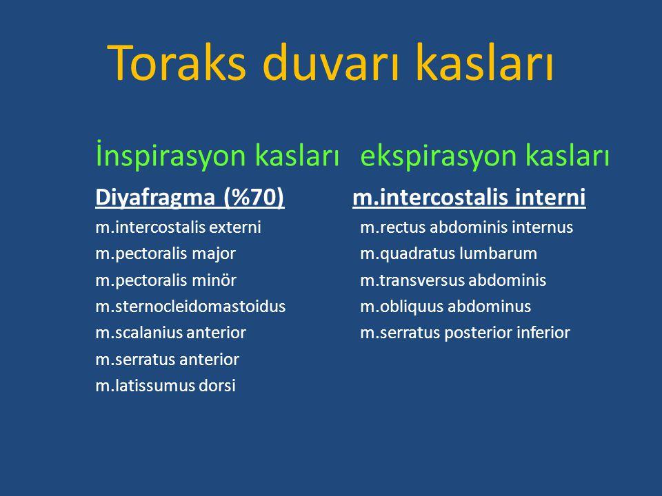 Toraks duvarı kasları İnspirasyon kasları ekspirasyon kasları