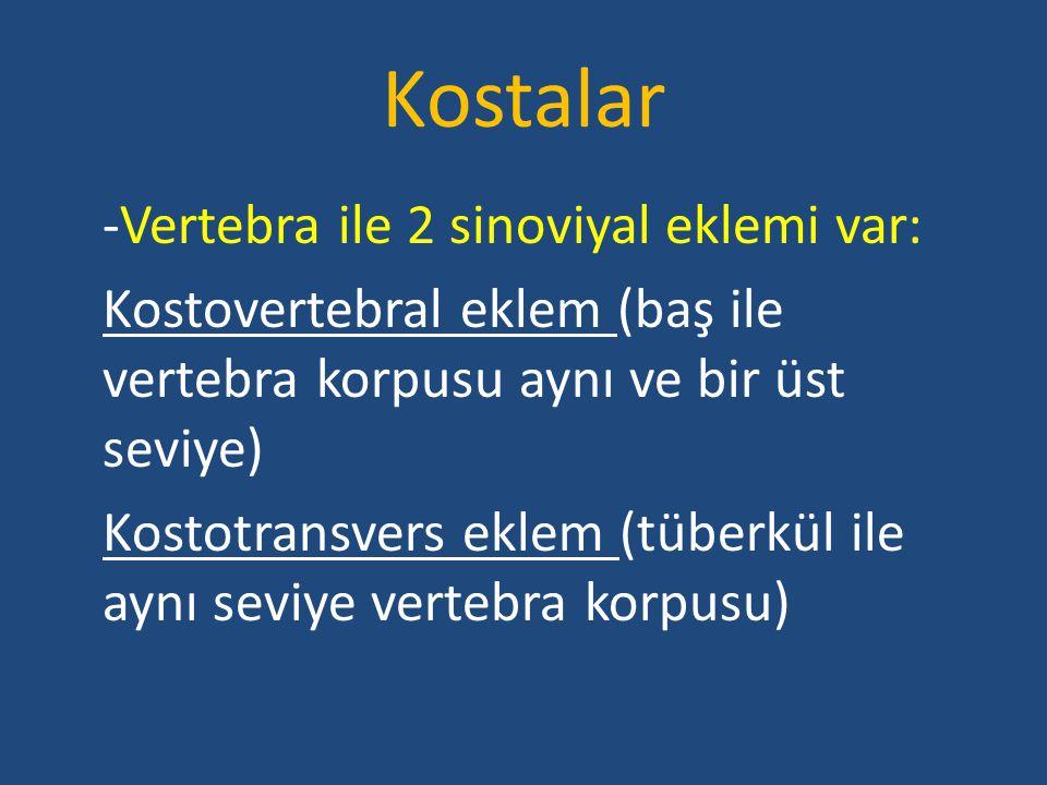 Kostalar -Vertebra ile 2 sinoviyal eklemi var: Kostovertebral eklem (baş ile vertebra korpusu aynı ve bir üst seviye)