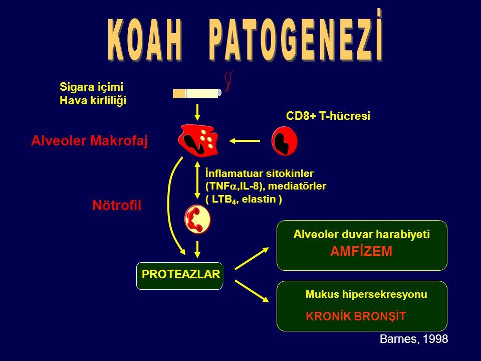 Alveoler duvar harabiyeti