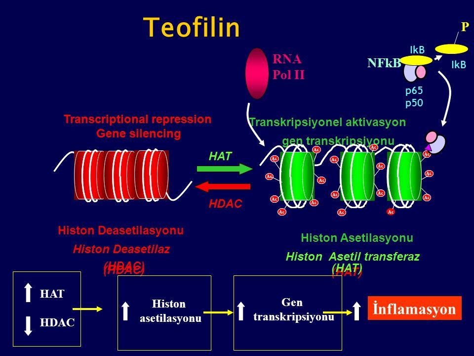 Teofilin İnflamasyon P RNA NFkB Pol II Transcriptional repression