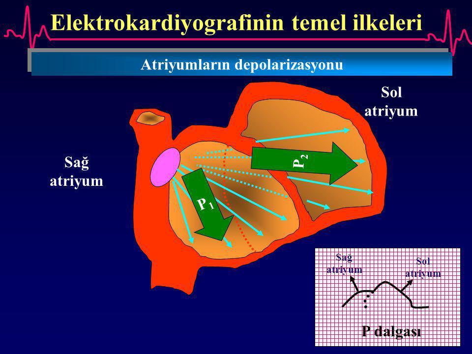 Elektrokardiyografinin temel ilkeleri Atriyumların depolarizasyonu
