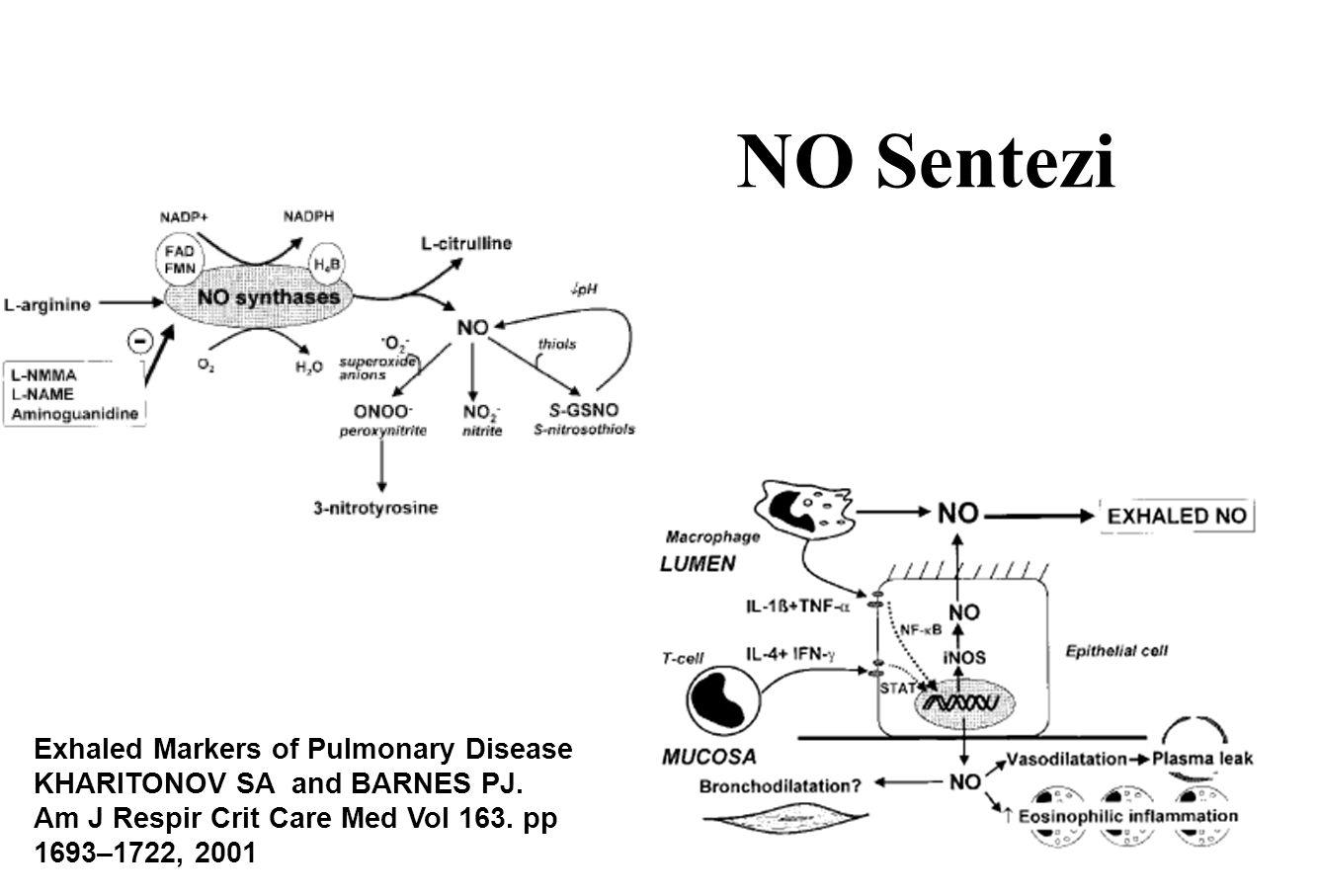 NO Sentezi Exhaled Markers of Pulmonary Disease