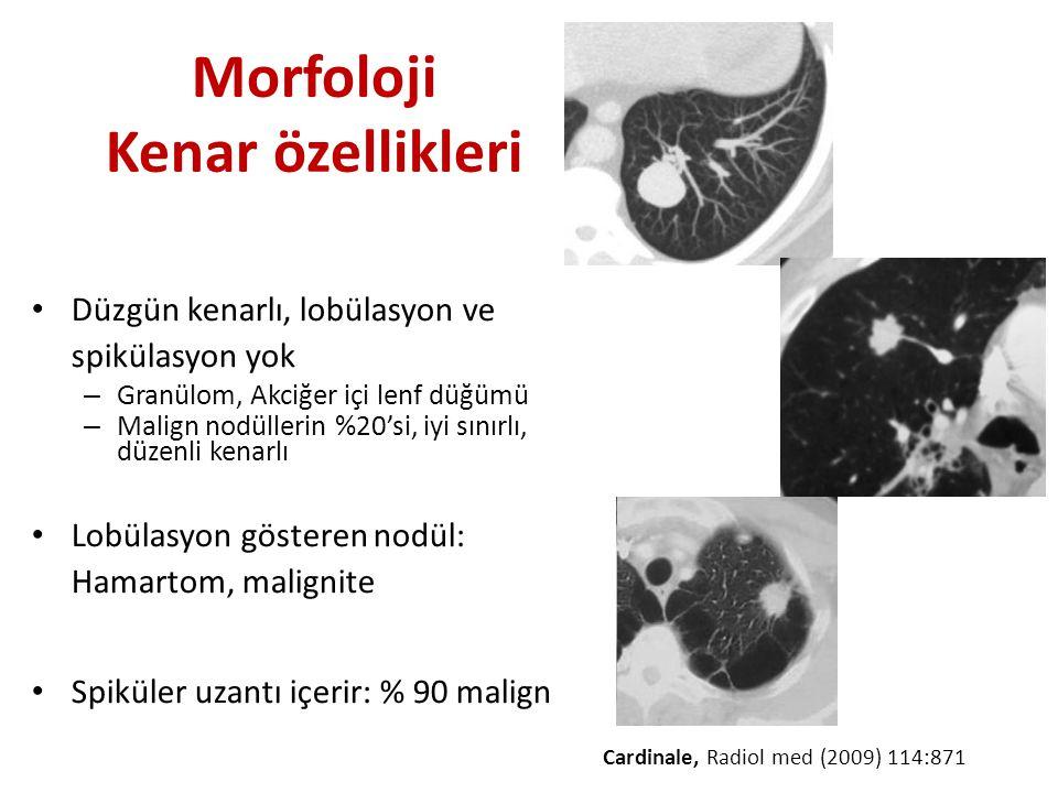 Morfoloji Kenar özellikleri