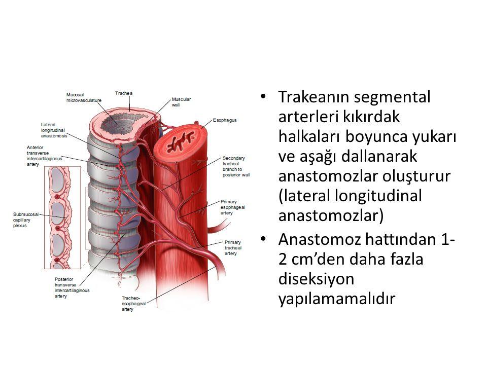 Trakeanın segmental arterleri kıkırdak halkaları boyunca yukarı ve aşağı dallanarak anastomozlar oluşturur (lateral longitudinal anastomozlar)