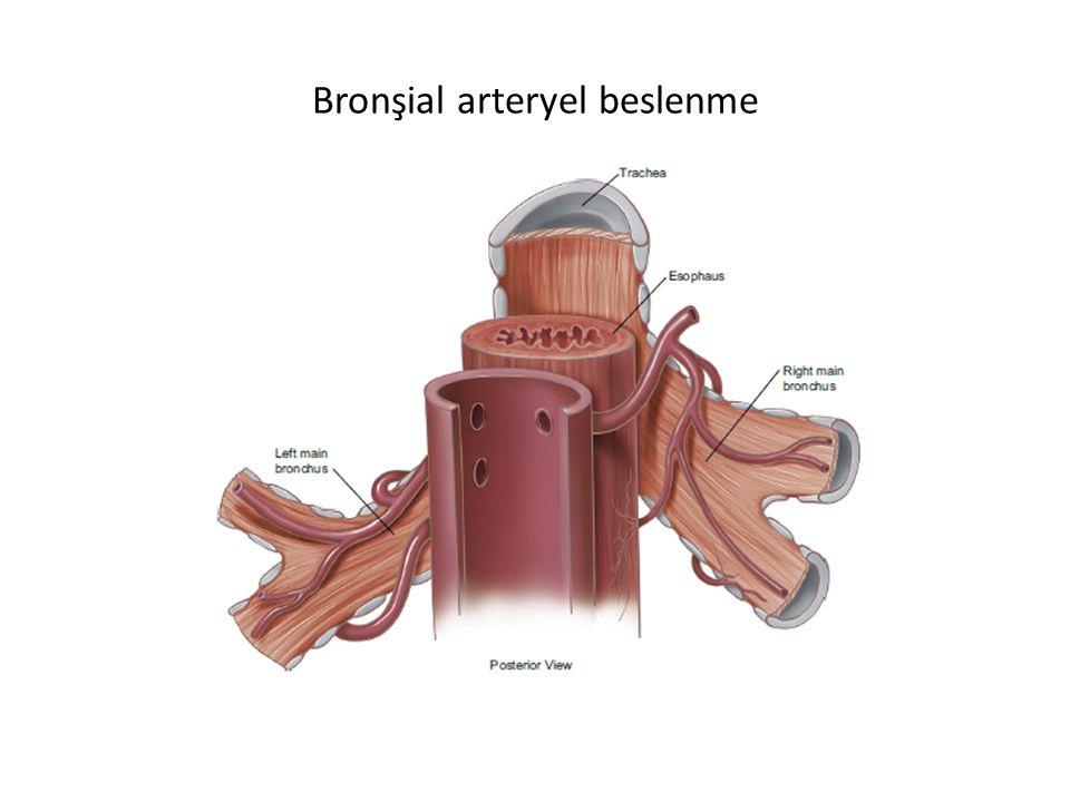 Bronşial arteryel beslenme