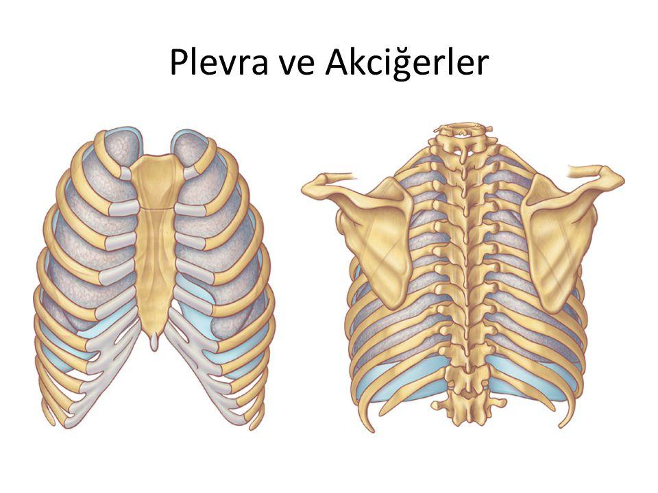 Plevra ve Akciğerler
