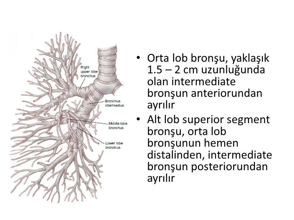 Orta lob bronşu, yaklaşık 1