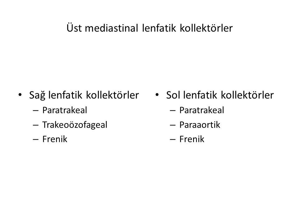 Üst mediastinal lenfatik kollektörler